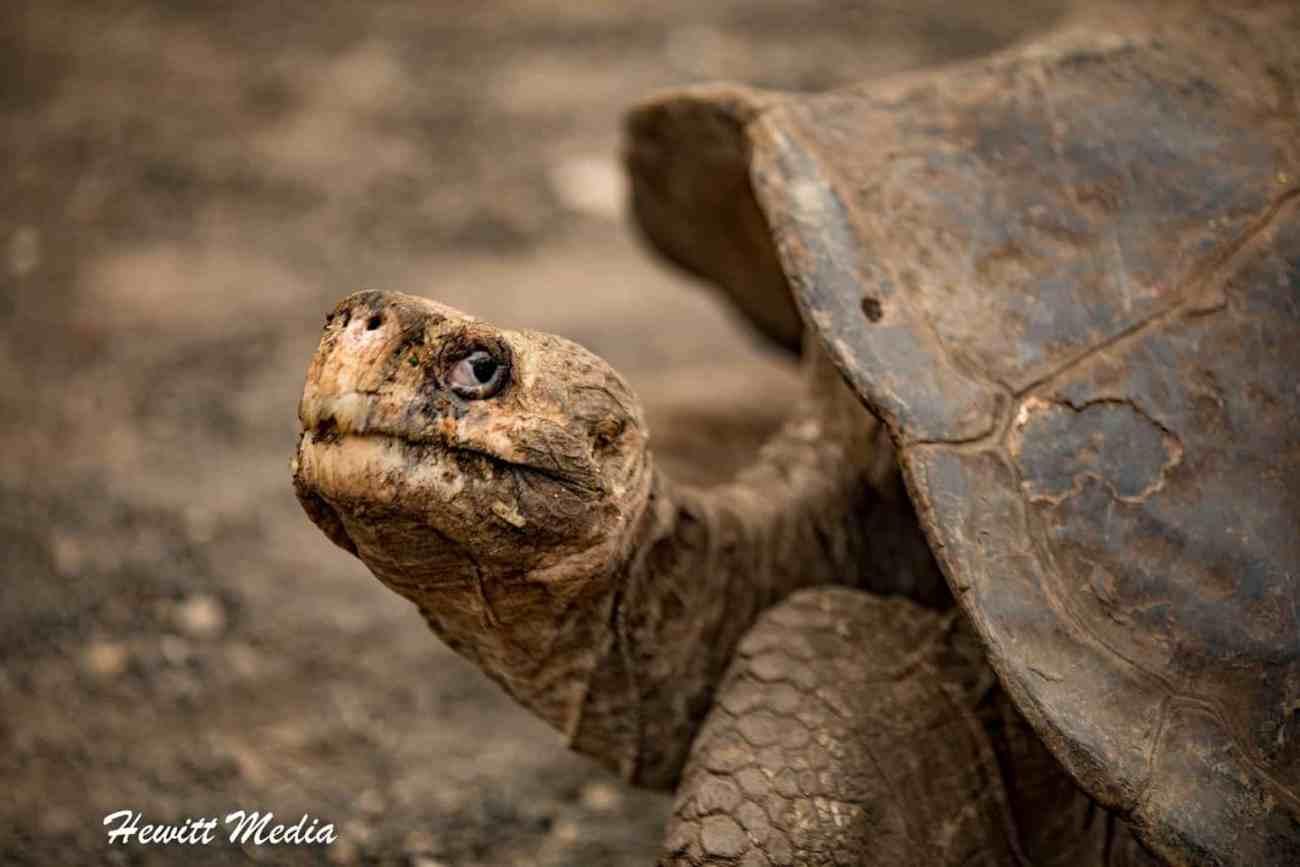 Galapagos-9834
