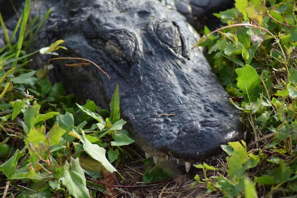 Everglades NP.jpg