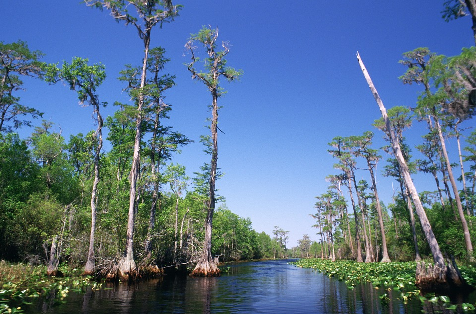 Georgia - Okefenokee Swamp.jpg