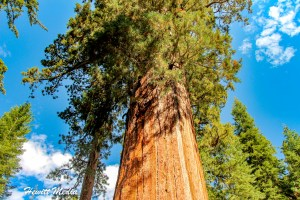 Epic National Parks Road Trips – Heart of California Road Trip