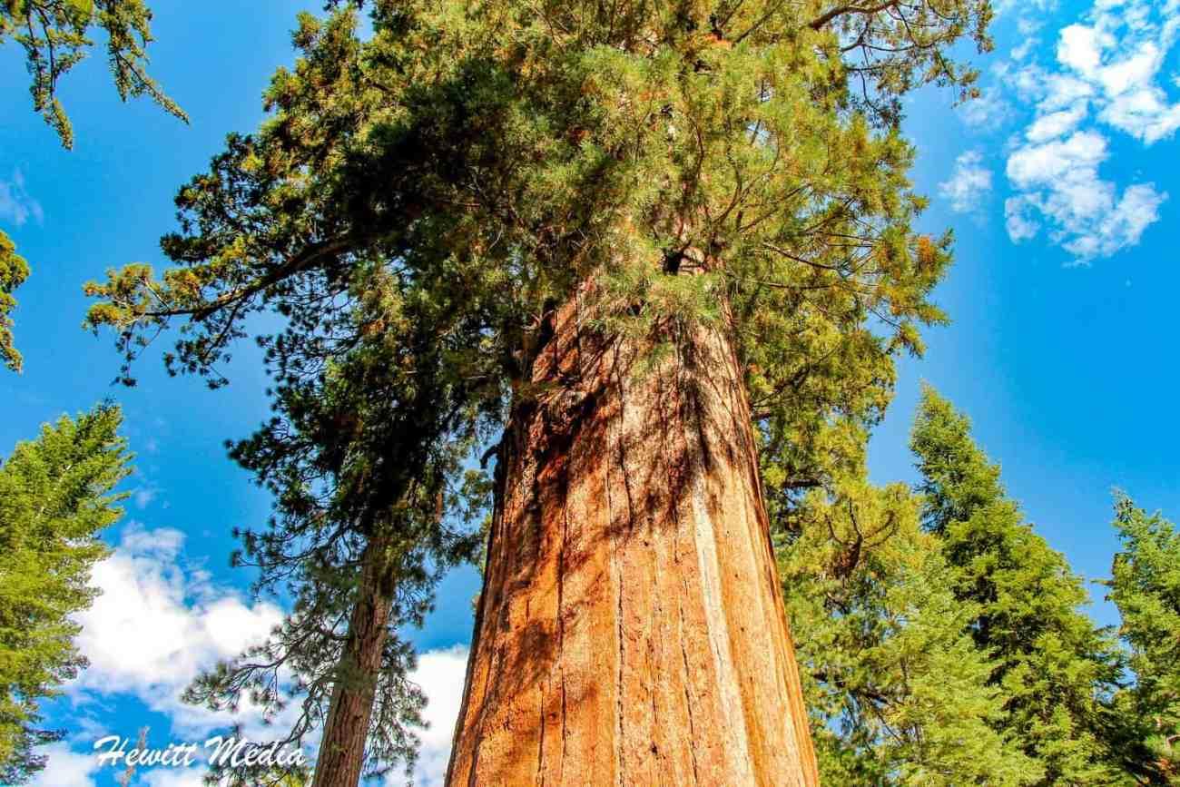 Sequoia-0873.jpg