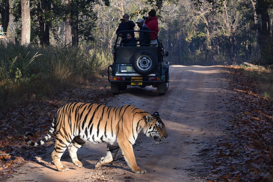 Tiger Safari India.jpg