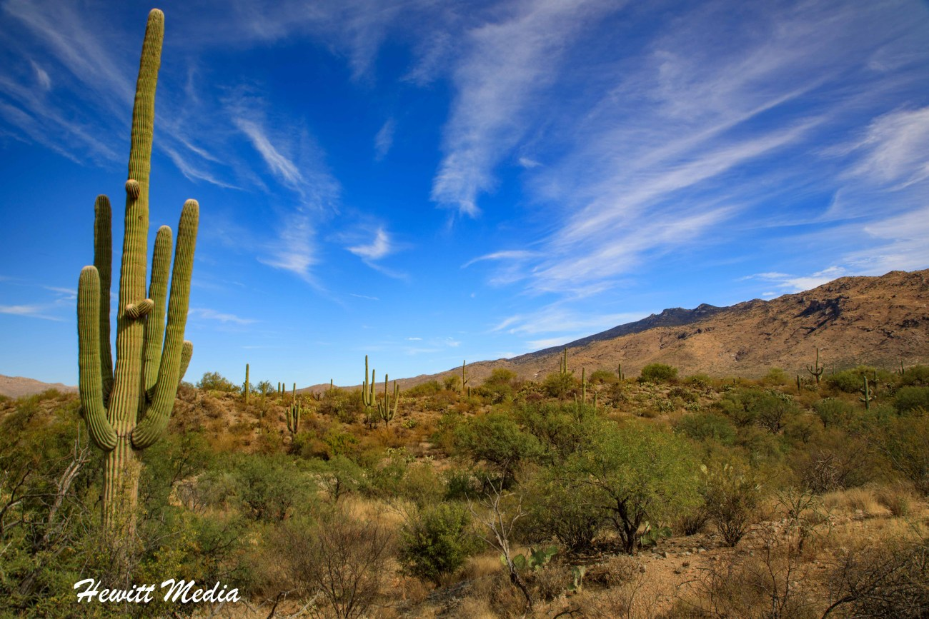 Saguaro National Park-5984