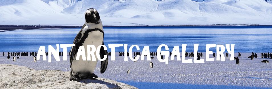 Antactica Gallery Header