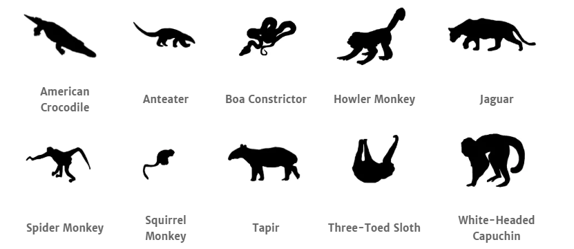 Corcovado National Park animals.png