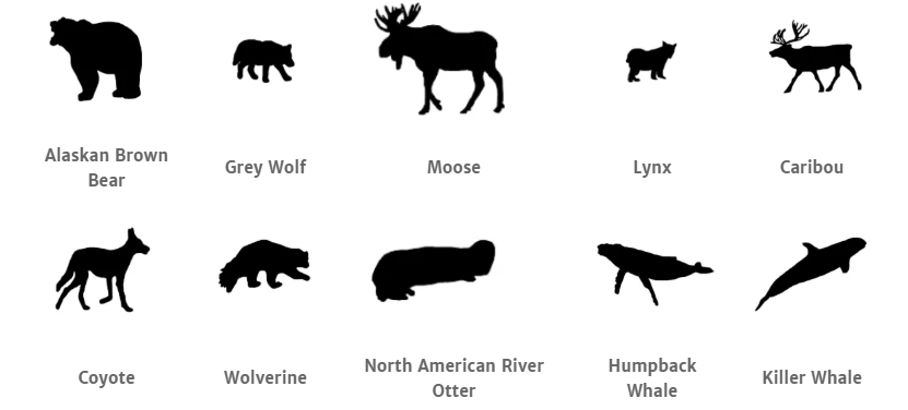 Katmai National Park animals.png