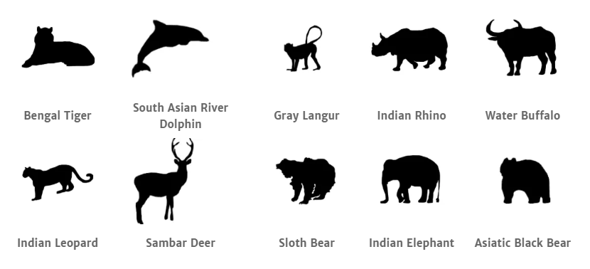 Kaziranga National Park animals.png