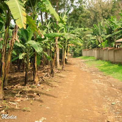 The walk to the coffee plantation