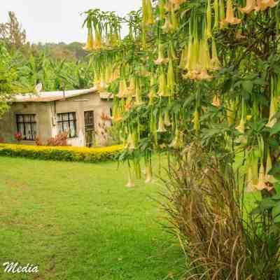 The coffee plantation