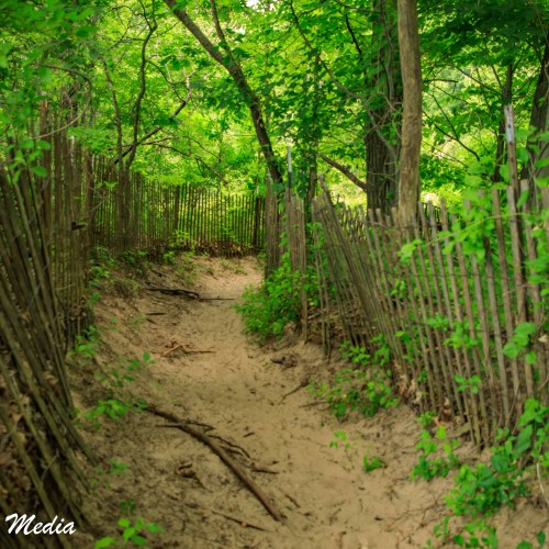 Hiking in Indiana Dunes State Park
