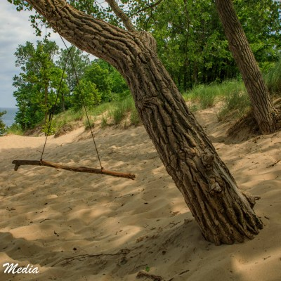 Makeshift Swing in Indiana Dunes State Park