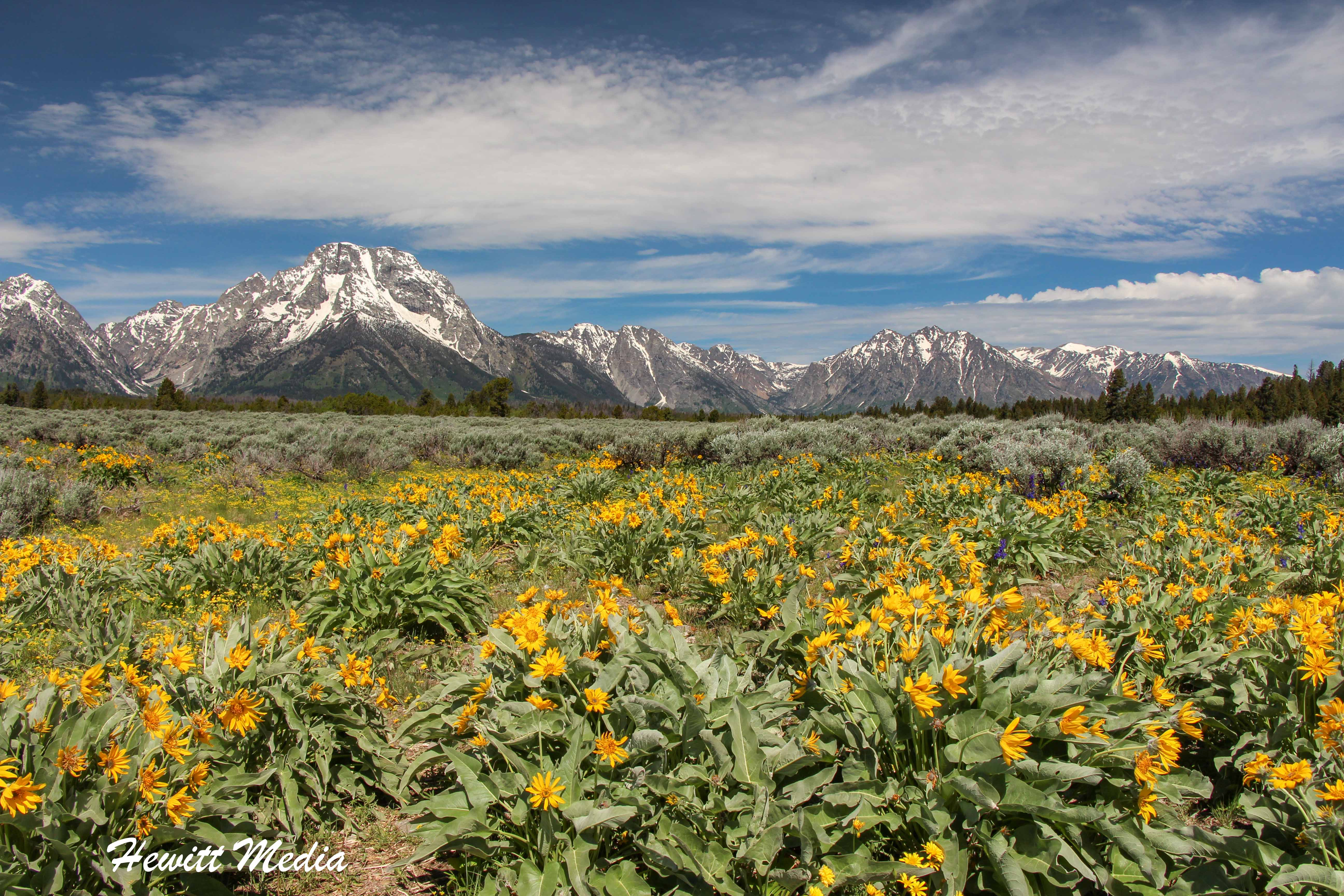 Flowers in front of the Grand Tetons