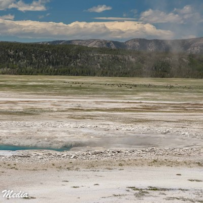 The Norris Geyser Basin in Yellowstone National Park