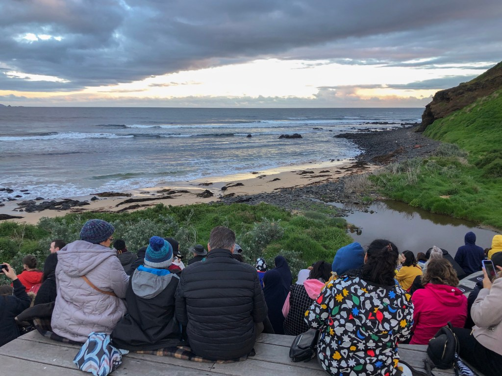 Travel Journal (9/24/2019):  Seeing the Little Penguins of Phillip Island