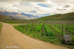 Guide to Wine Tours in New Zealand's Central Otago Valley