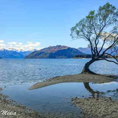 The beautiful Wanaka Tree