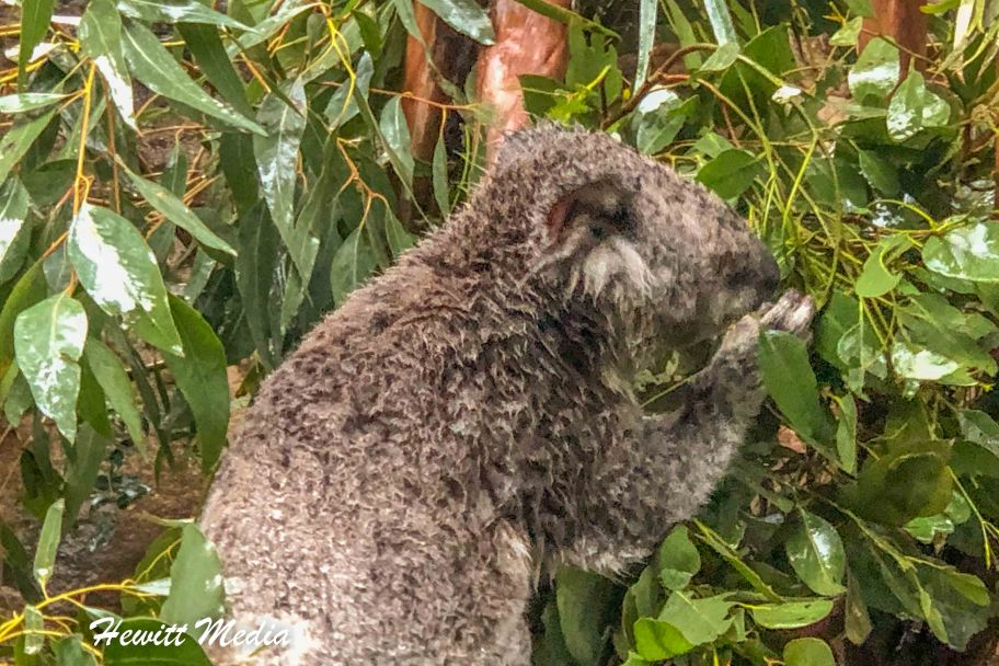 Sydney Zoo