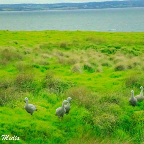Philip Island-3113