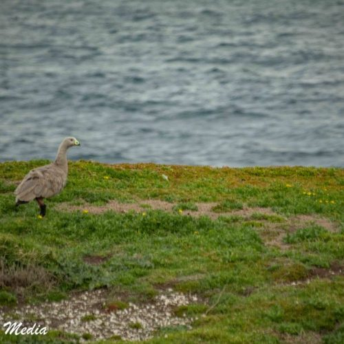 Philip Island-3147