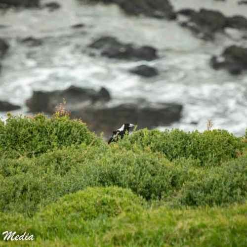 Philip Island-3149