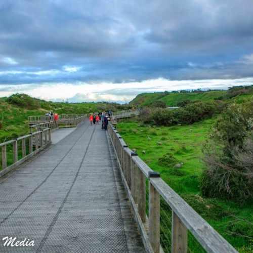Philip Island-3175