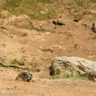Rocky Mountain National Park-5782