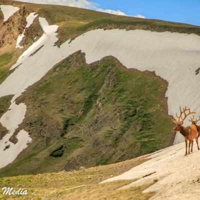 Rocky Mountain National Park-5796