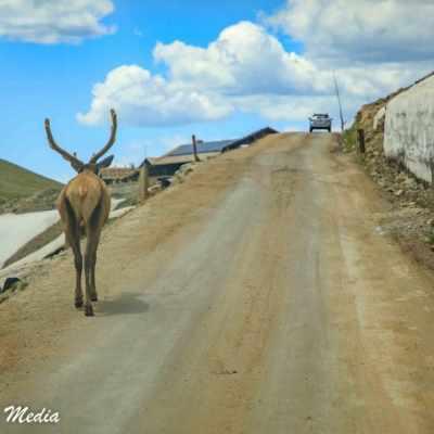Rocky Mountain National Park-5812