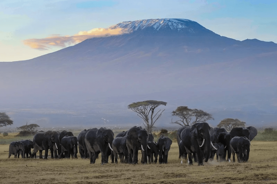 Tanzania Safari Itinerary - Kilimanjaro National Park
