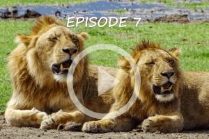 New Travel Vlog Episode – Tanzania Safari Advice and Itinerary