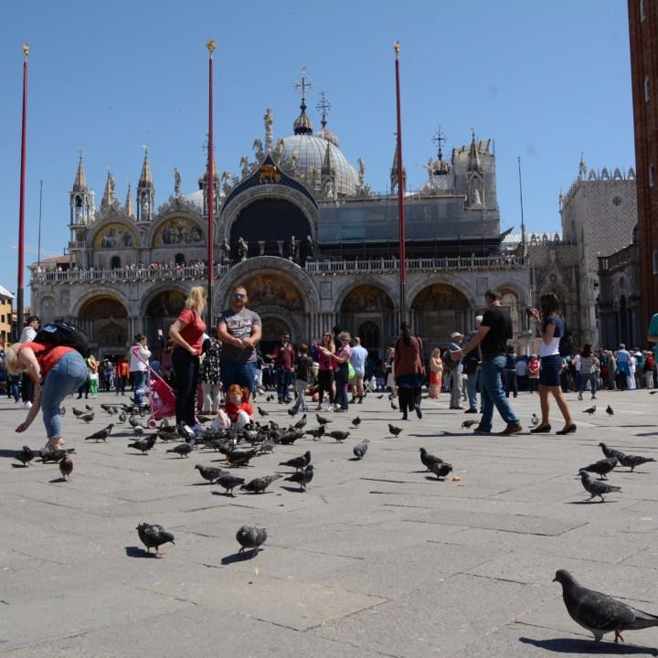 san marco venice pigeons