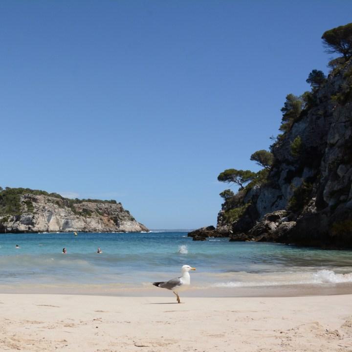 seagull cala marcellata menorca beach