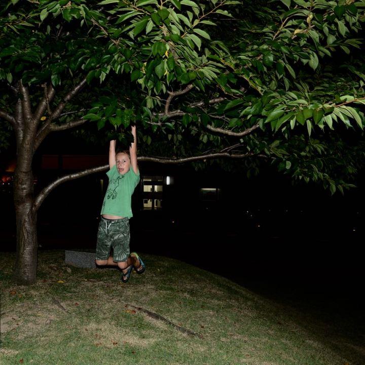 Onomichi cherry tree