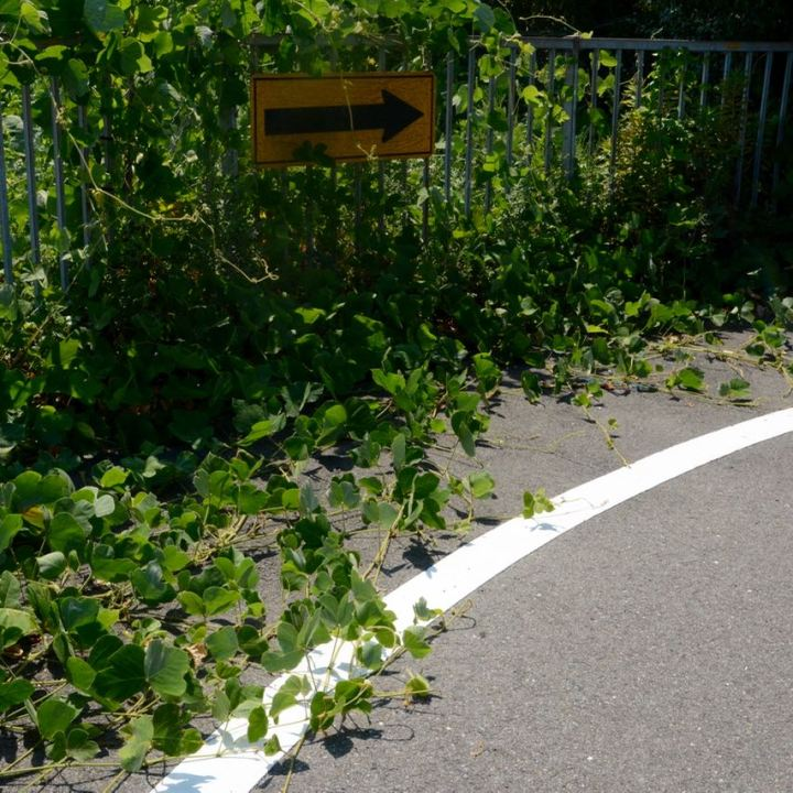shimanami kaido cycling seto inland sea plants