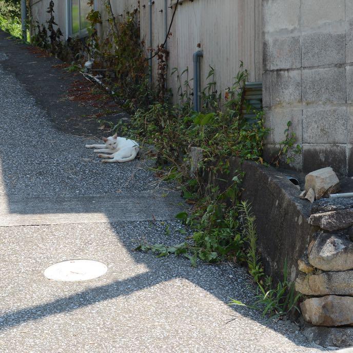 shimanami kaido cycling seto inland sea oshima cat
