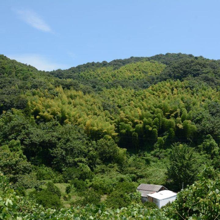shimanami kaido cycling seto inland sea oshima wildness