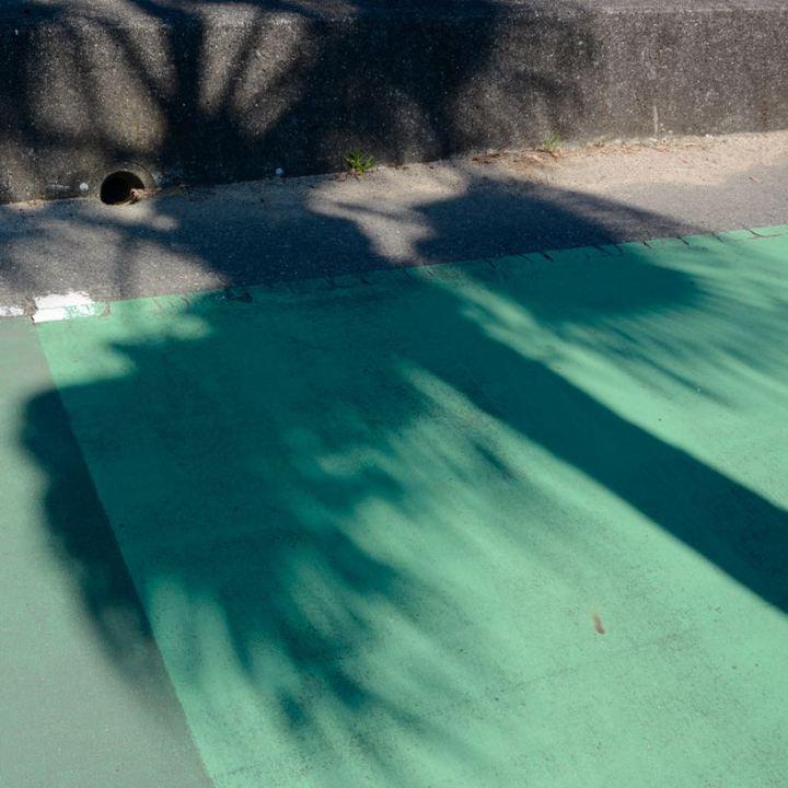 shimanami kaido ikuchijima palm tree
