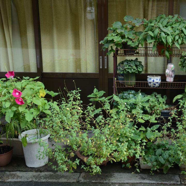 Flowers outside a house Kurashiki Japan