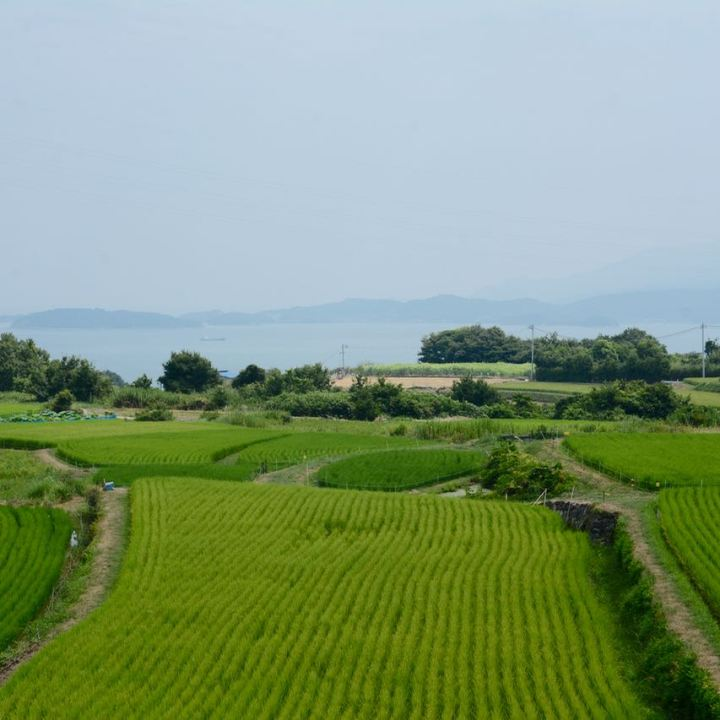 teshima ieura setouchi tirennale rice fields