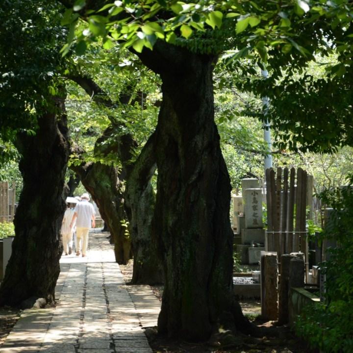 yanaka cemetery graves shaded path
