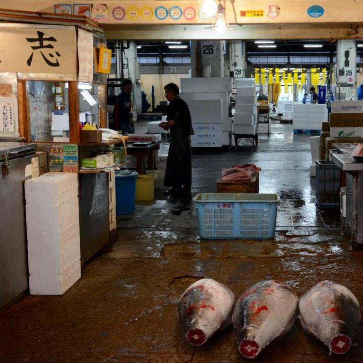 Tsukiji tokyo fish market tuna for sale