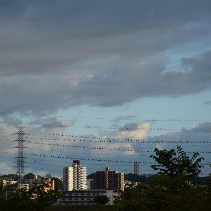 tama river cycling birds