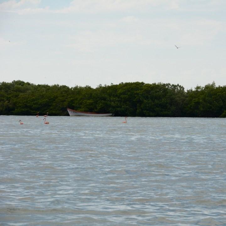 Travel with children kids mexico rio lagartos  flamingoes