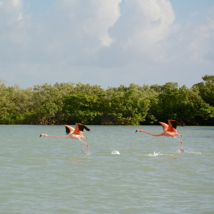 Travel with children kids mexico rio lagartos flamingoes in flight