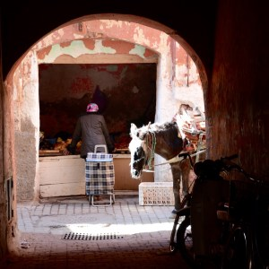 travel with children kids morocco marrakech souk donkey