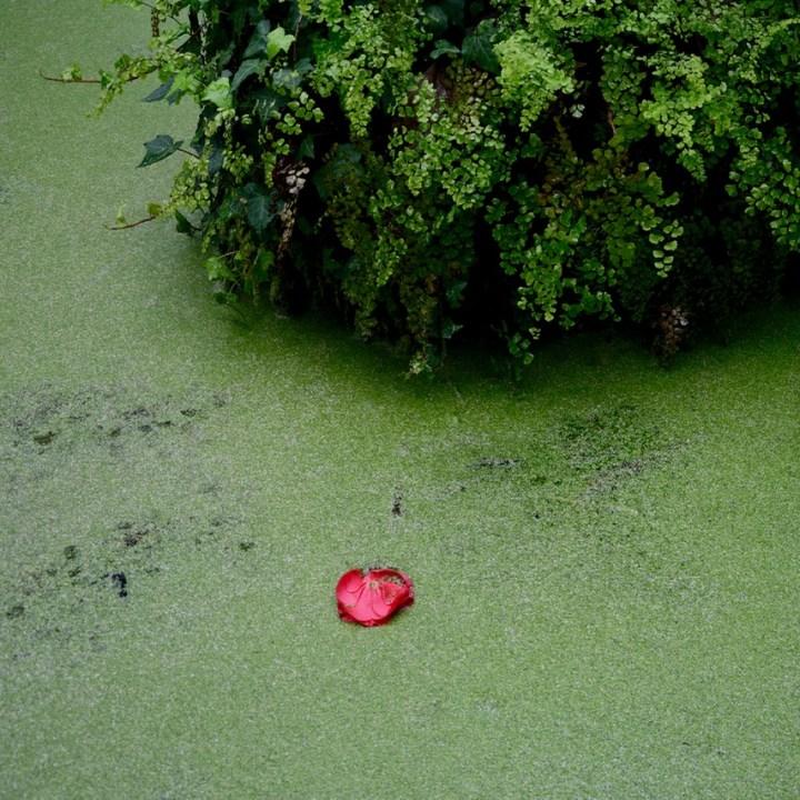 travel with kids children pisa italy botanic garden pond