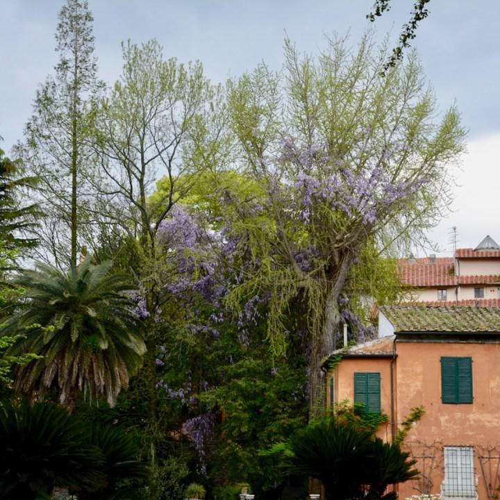 travel with kids children pisa italy botanic garden wisteria bush