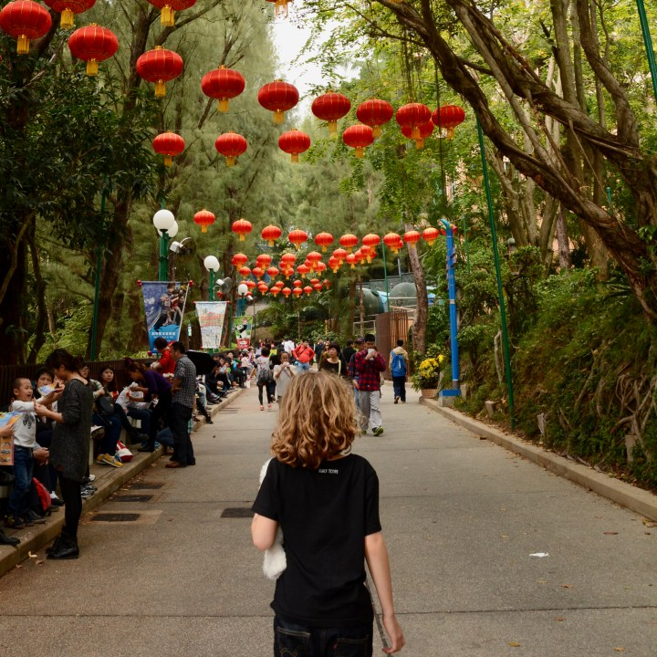 hong kong ocean park with kids children china lampoons