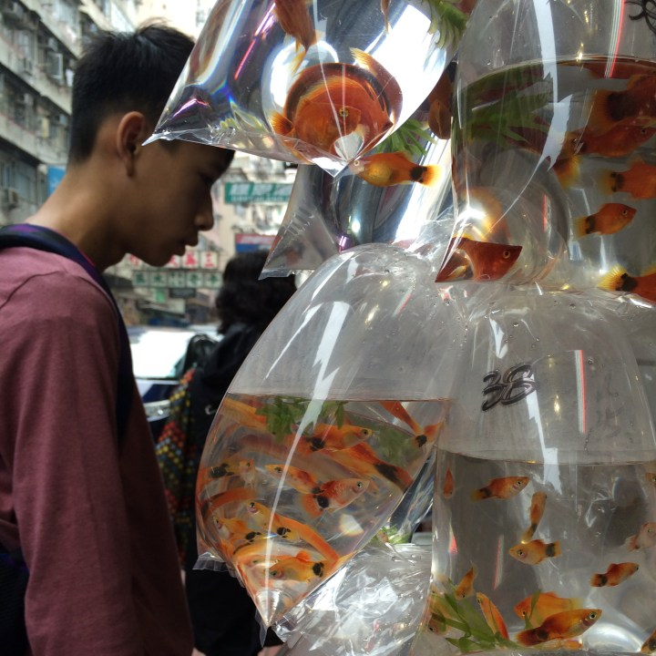 Kowloon, Hong Kong | A Walking Tour through the Colourful Markets of Kowloon