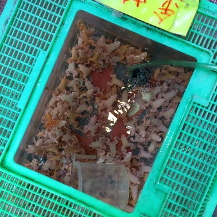 hong kong with kids children kowloon goldfish market albino frogs